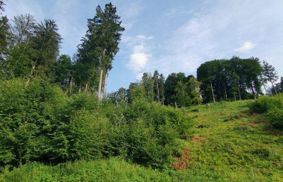 Kreistag: Private Waldbesitzer beratend begleiten